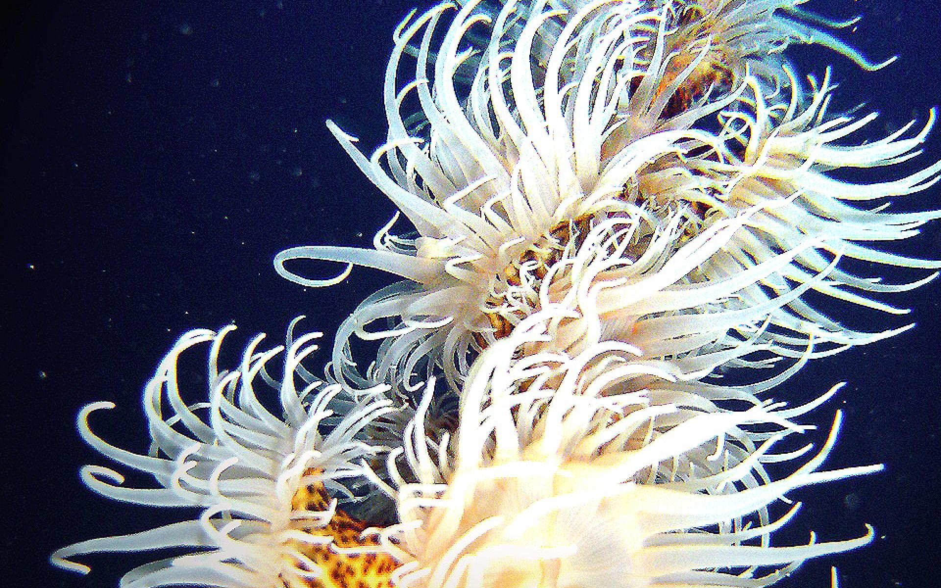 black-coral-033832597A-E40B-796F-01D5-B8AF210749D0.jpg